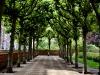 Сад у монастыря кармелитов