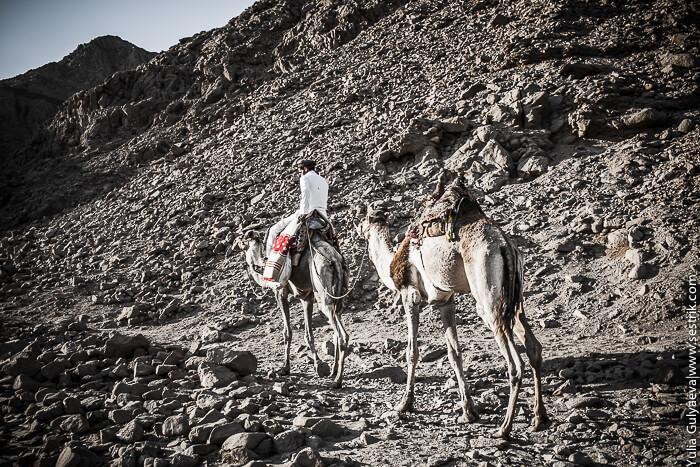 бедуин с верблюдом