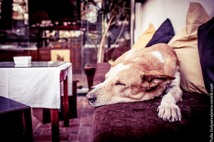 спящая собака в кофейне