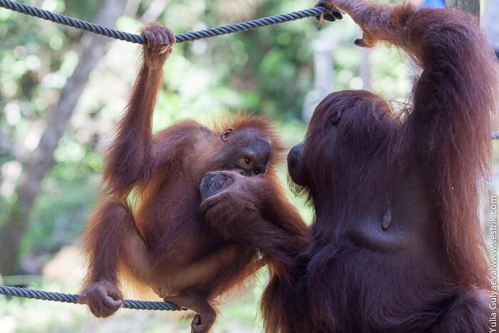 обезьяны едят