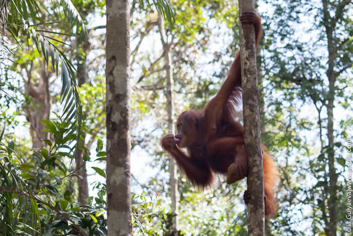 фото обезьяна на дереве