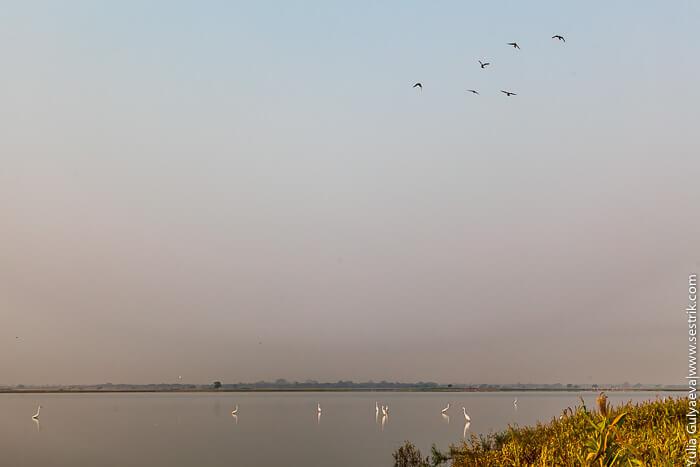 стая птиц на озере