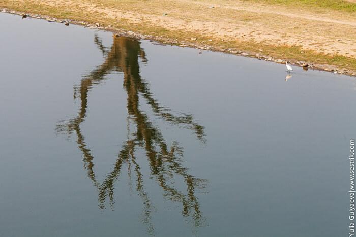 отражение дерева в воде
