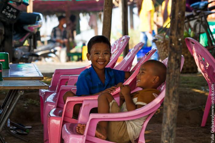 маленькие бирманцы