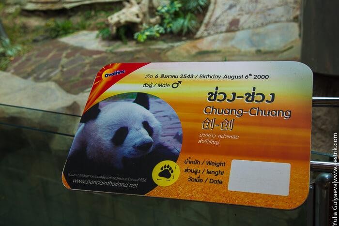 панда в тайланд