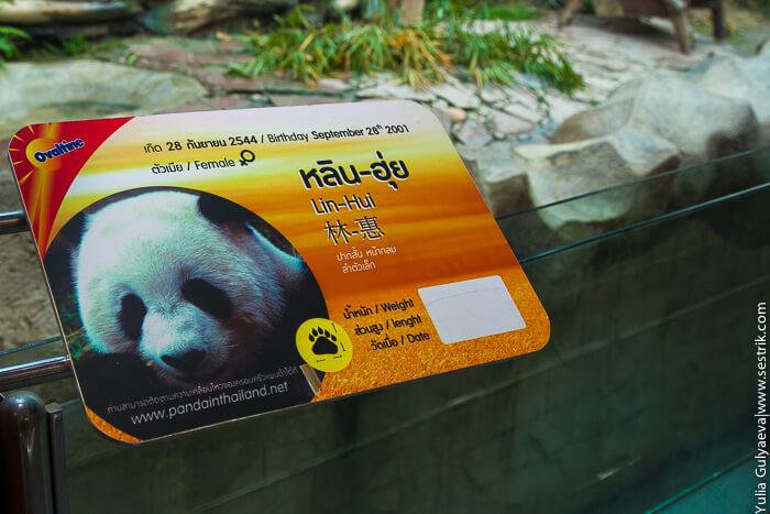 панда в чианг май