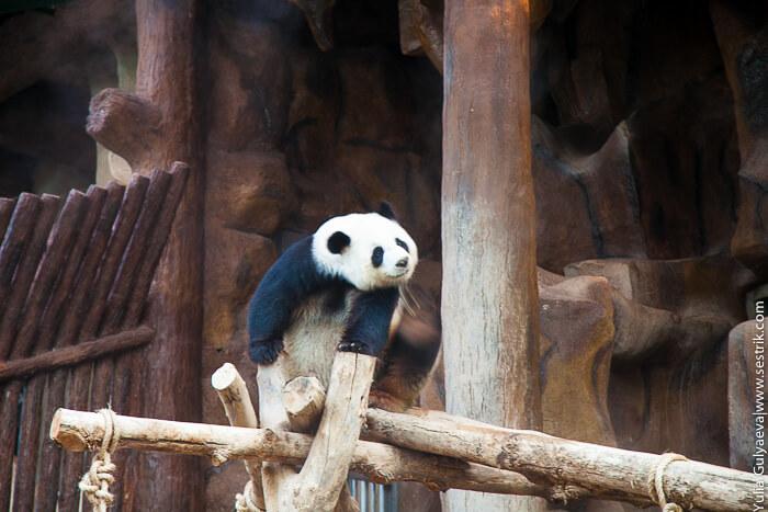 zoo_chiang-12