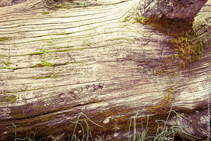 надписи на дереве