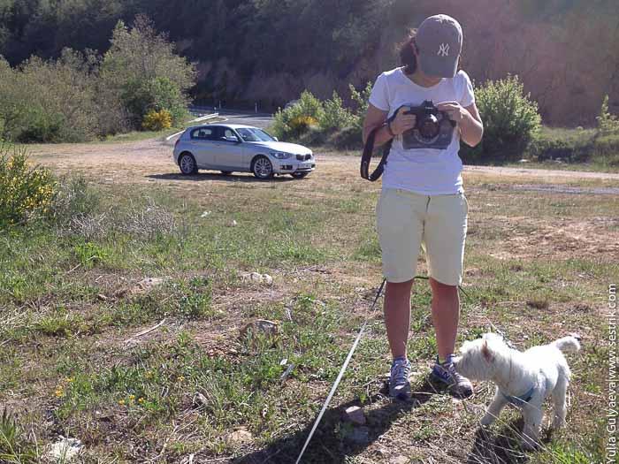 девушка с собакой фотографирует природу на заднем плане арендованный автомобиль