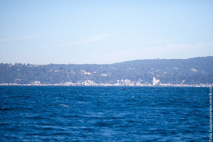 киты в заливе монтерей
