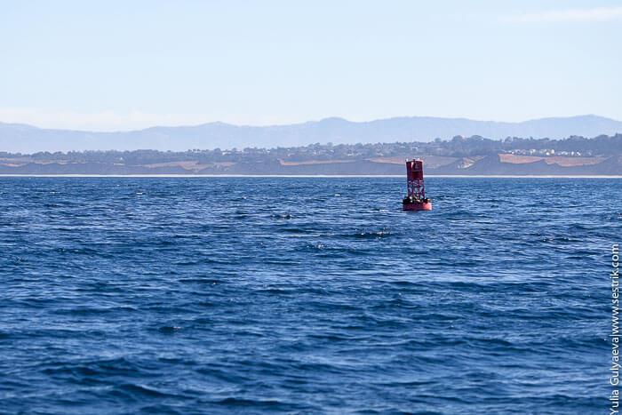 буек в море