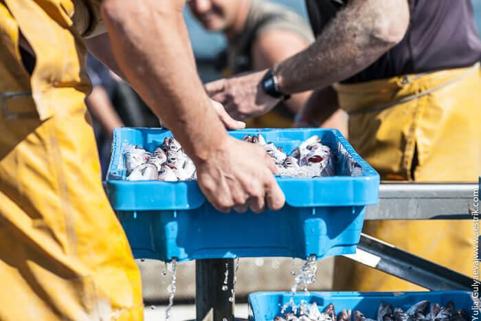 разгрузка рыбы в порта