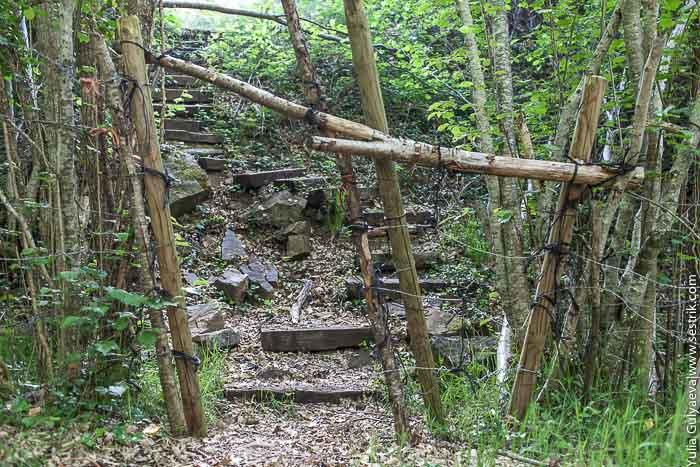 лестница в лесу