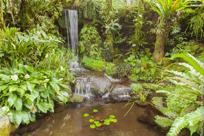водопад и пруд в ботаническом саду