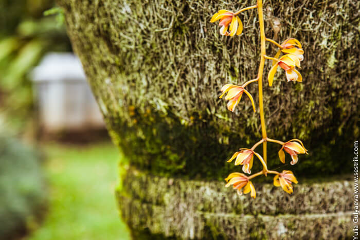 в ботаническом саду на бали