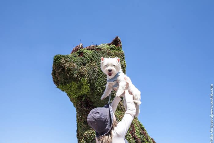 в бильбао с собакой