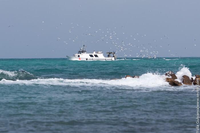 чайки над кораблем