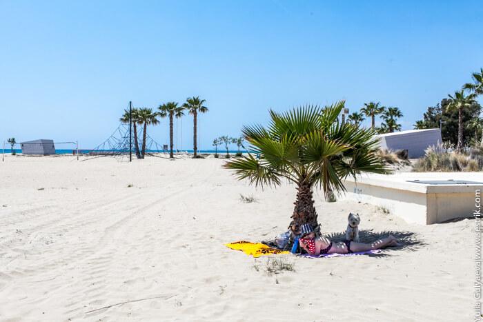 с собакой на пляж в испанию