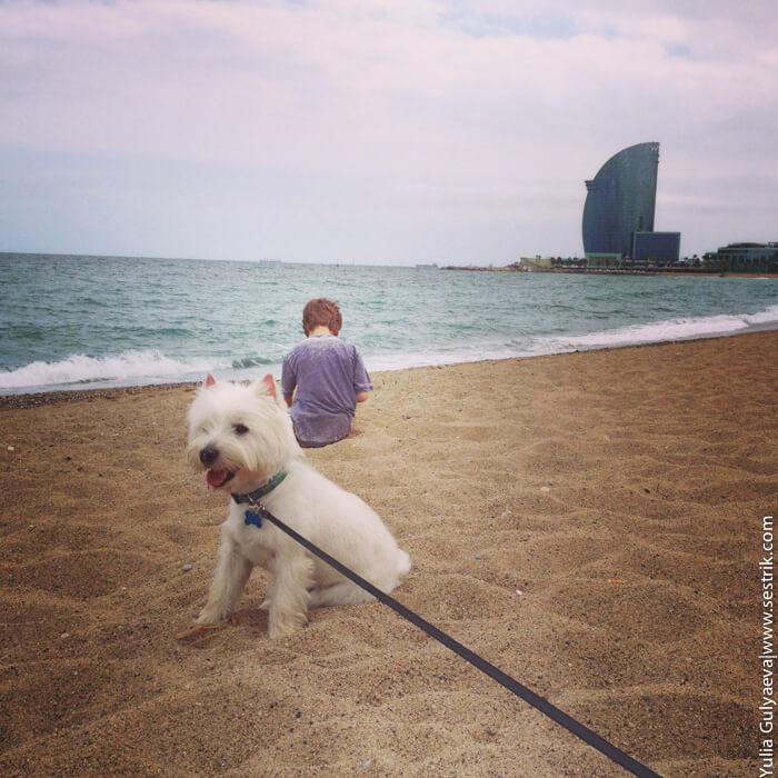 с собакой на пляж в барселоне