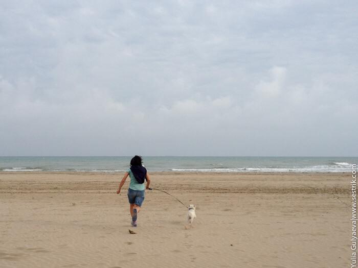 с собакой на море