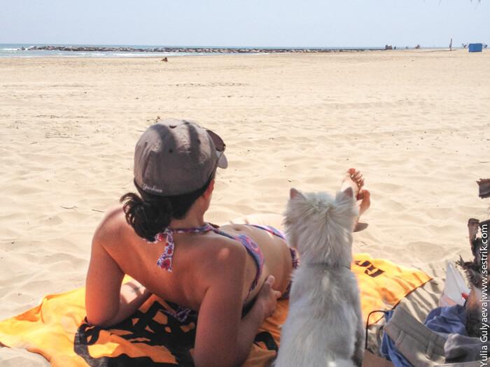 с собакой на море в испанию