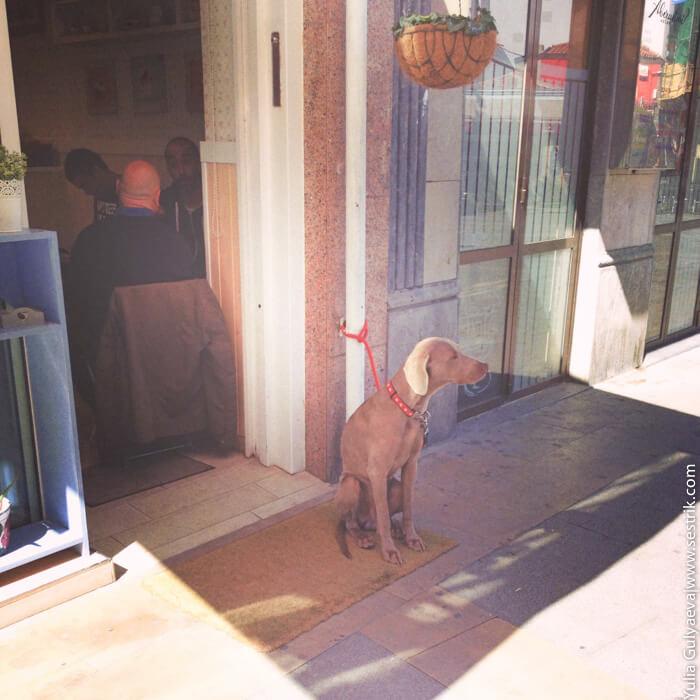 с собакой в кафе в испании нельзя