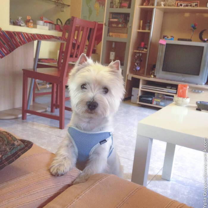 кватира с собакой в сарагосе