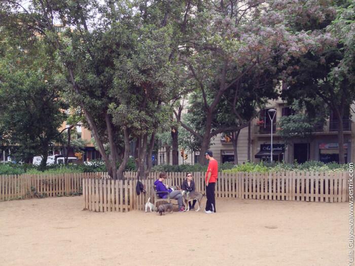 дог парк в барселоне