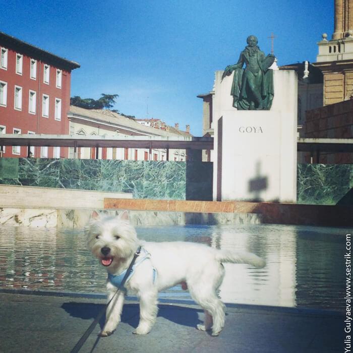 с собакой в Сарагосу
