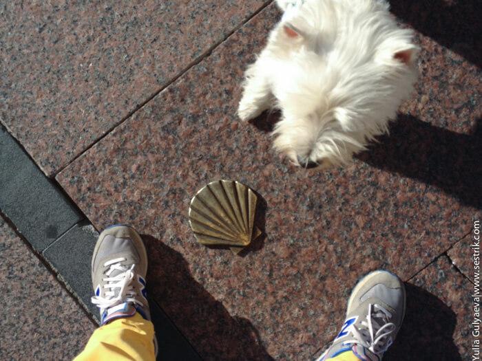с собакой в испанию путь сантьяго