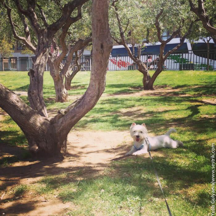 как с собакой посещать достопримечательности