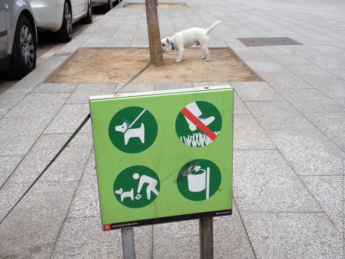 знак разрешающий выгул собак