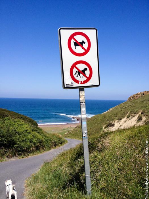 на пляж с собакой в испании