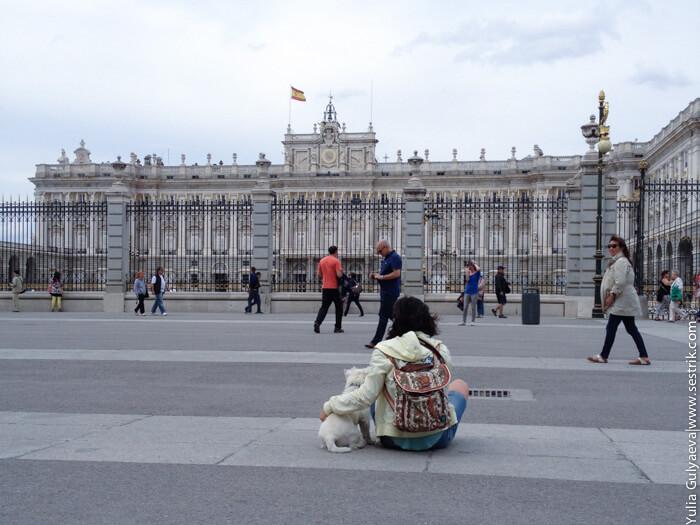 с собакой в Мадрид