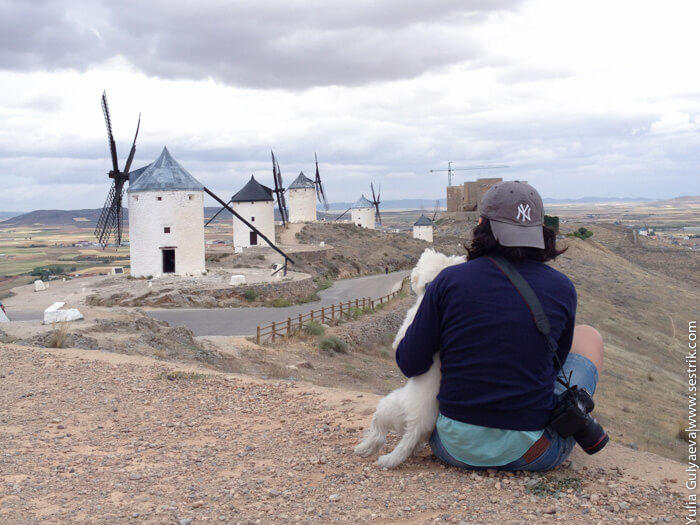 с собакой в испанию