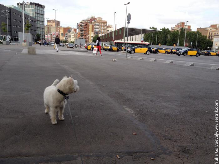 с собакой в такси в испании