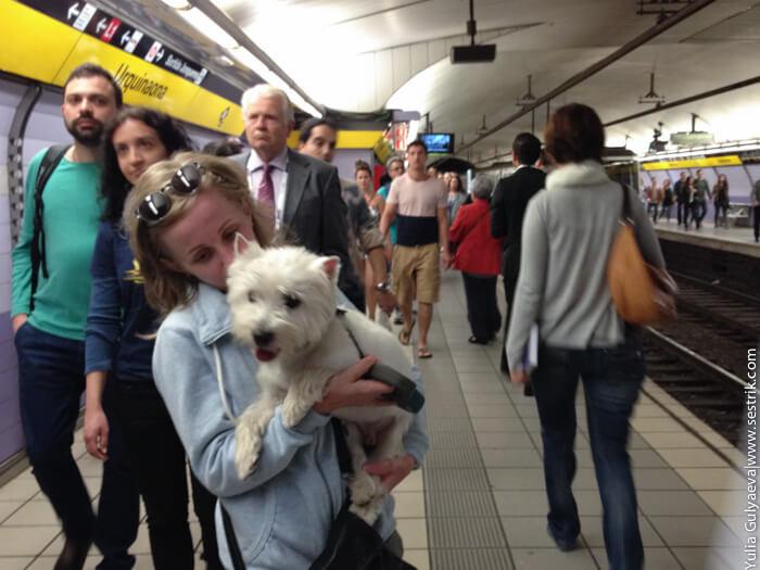 с собакой в метро барселоны