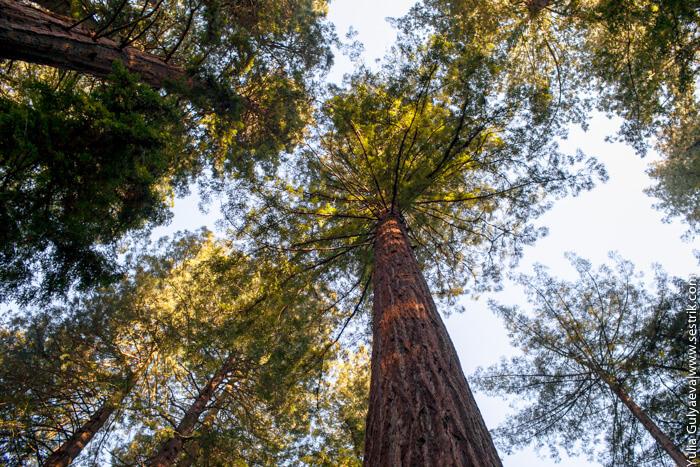 когда деревья были большие