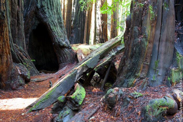 секвойя парк в калифорнии