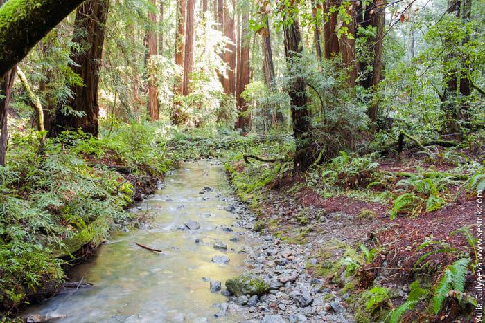река в сказочном лесу