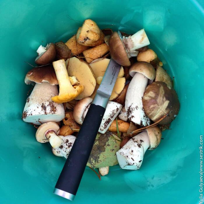 где собирать белые грибы