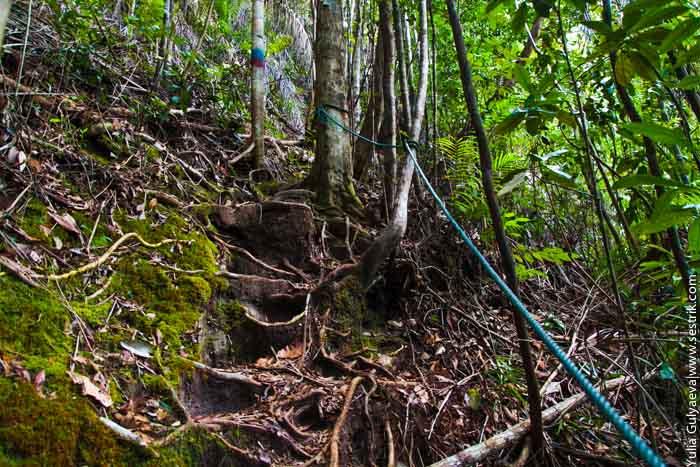 треки в заповеднике в джунглях