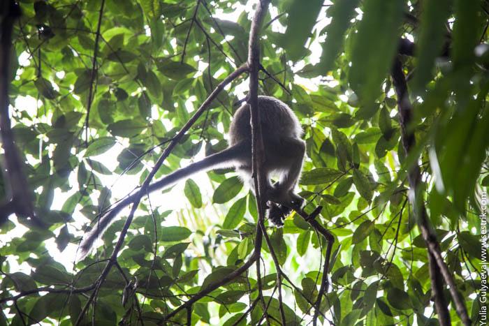 обезьяны в джунглях