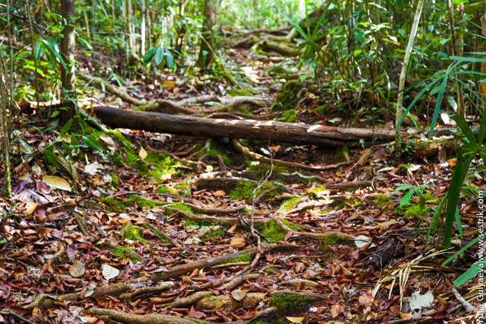 прогулка по джунглям