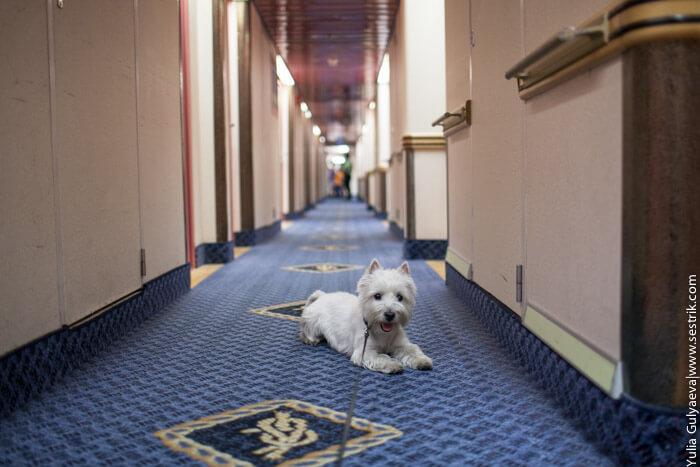 собака в коридоре на пароме викинг лайн