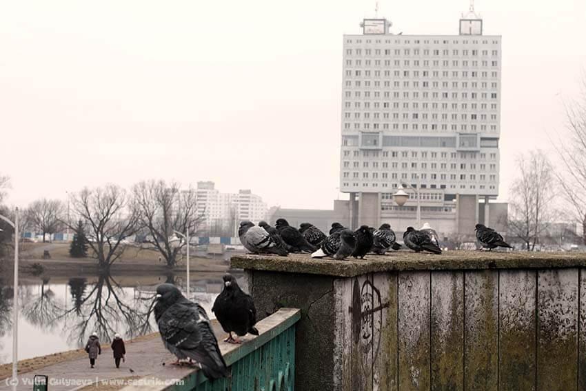высотка в Калининграде