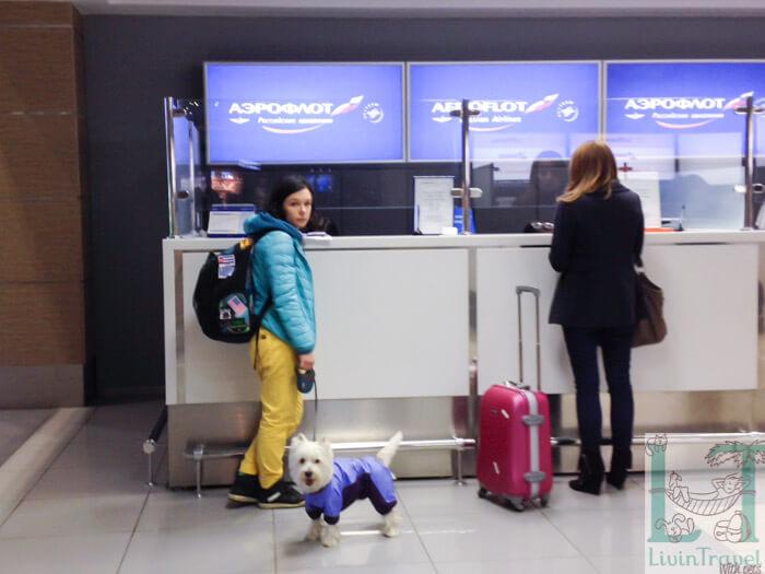 перелет с собакой аэрофлотом