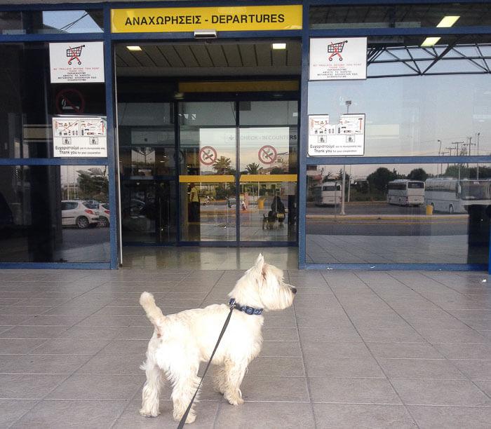 с собакой в грецию