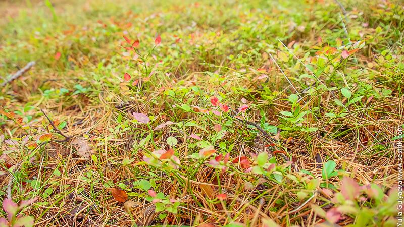 осенняя трава