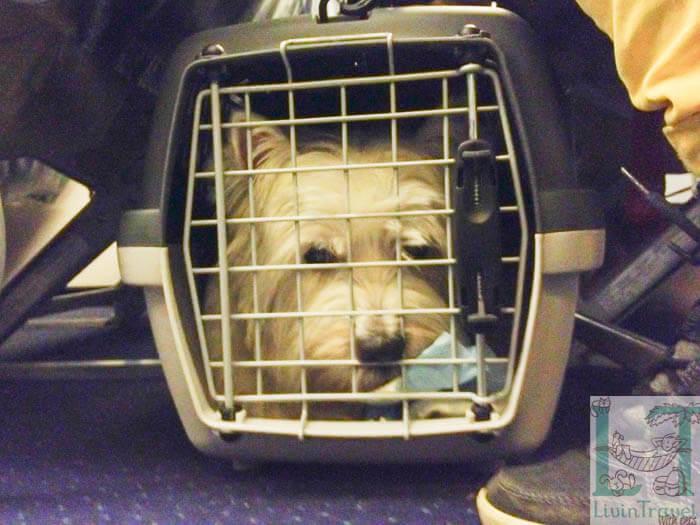 собака в переноске на борту самолета